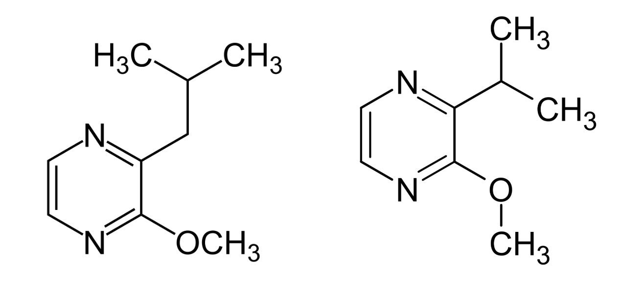 Molecular structures of Pyrazines