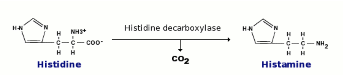 Chemical Reaction Where CO2 is Added to Make Histamine